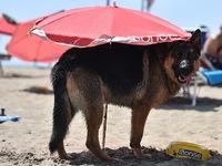 Thiên đường nghỉ dưỡng dành cho cún cưng tại Argentina