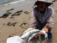 Tìm giải pháp hỗ trợ đền bù cho ngư dân miền Trung