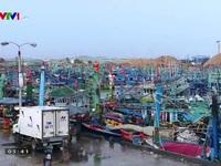 Bình Định: Các cảng cá giúp ngư dân giải phóng thủy sản và tránh bão số 4