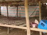 Quảng Bình: Hàng trăm trang trại trống trơn sau trận lũ dữ