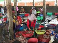 Nhiều doanh nghiệp thủy sản thiếu nguyên liệu sản xuất