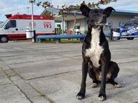 Hà Nội ngày đầu thực hiện lệnh cấm chó không rọ mõm vào phố đi bộ