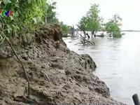 Vĩnh Long: Cồn Công sạt lở nghiêm trọng do khai thác cát