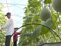TP.HCM sẽ đầu tư thêm 2 khu nông nghiệp công nghệ cao