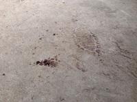 Vụ án sát hại 4 bà cháu tại Quảng Ninh là cướp của, giết người