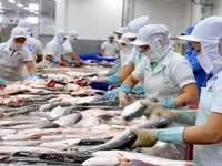 Xuất khẩu cá tra còn nhiều khó khăn