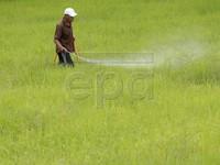 Thái Lan cấp khoản vay 1 tỷ USD hỗ trợ nông dân trồng lúa gạo