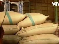 Giá gạo Thái Lan đạt mức cao kỷ lục trong vòng 2 năm