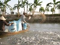 ĐBSCL sản xuất 5 tỷ con cá tra giống chất lượng cao