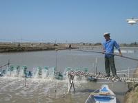 Chấn chỉnh sản xuất giống để thi công thương hiệu tôm Việt Nam