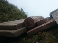 Dân địa phương chở gỗ lậu, rừng giáp ranh Phú Thọ - Yên Bái 'chảy máu' hàng ngày