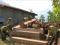 Quảng Nam: Phá đường dây khai thác gỗ lậu chuyên nghiệp