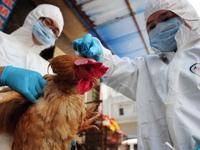 Hong Kong (Trung Quốc) xác nhận ca tử vong đầu tiên do cúm gia cầm H7N9