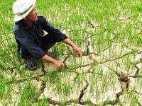 Chính phủ hỗ trợ 2.040 tỷ đồng chống hạn hán, xâm nhập mặn