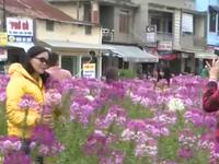 Không gian công cộng - Sức hút mới cho TP Đà Lạt