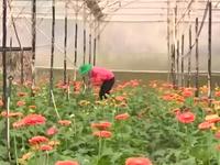 Nâng cao thu nhập từ thương hiệu hoa Đà Lạt