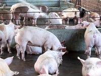 Bộ Y tế cho phép nhập khẩu trở lại nguyên liệu Salbutamol