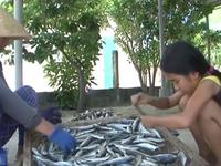 Quảng Trị miễn học phí cho học sinh vùng biển