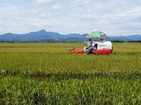 Xây dựng thương hiệu lúa gạo miền Trung