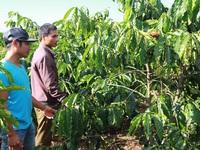 Bắt 3 đối tượng trộm cắp hơn 1 tấn cà phê tại Lâm Đồng