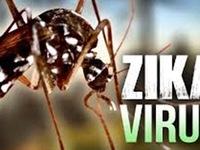 Phát hiện nhiều cá thể muỗi vằn chứa virus Zika