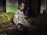 Indonesia muốn xóa bỏ lao động trẻ em vào 2022