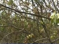 Nhiều nhà vườn ở Vĩnh Long bị thiệt hại nặng do sự cố vỡ đê