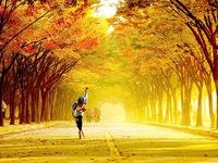 Tuyệt đẹp khung cảnh mùa thu lá đỏ tại Hàn Quốc