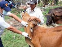 Hỗ trợ 25,5 tỉ đồng mua vaccine lở mồm long móng