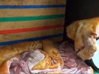 Bình Thuận: Phát hiện gần 1 tấn thịt heo nái thối làm giả heo rừng