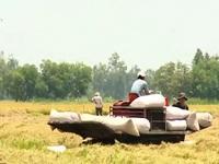Xuất khẩu gạo lần đầu xuống mức 6 triệu tấn/năm