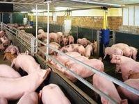 Nhiều kỳ vọng trong năm đầu triển khai liên kết chuỗi chăn nuôi
