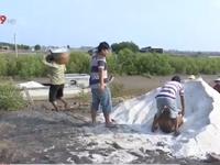 Bạc Liêu mua tạm trữ hơn 1.400 tấn muối