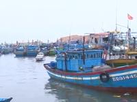 Nghịch lý thừa - thiếu khu neo đậu tàu thuyền ở miền Trung
