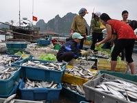 Ngư dân hài lòng với định mức bồi thường thiệt hại do sự cố môi trường biển