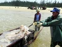 Kiểm tra kê khai bồi thường thiệt hại do sự cố môi trường biển tại Quảng Trị