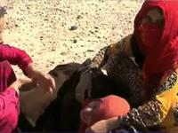Hàng trăm người dân Iraq bị bỏ rơi sau khi chạy thoát khỏi IS