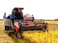 Khó khăn và giải pháp trong xây dựng chuỗi giá trị nông sản