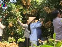 Hà Nội triển khai 96 điểm bán nông sản an toàn