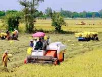 Cần đưa ngành nông nghiệp tăng trưởng trở lại