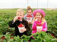 Du lịch nông nghiệp tại Mỹ hút khách