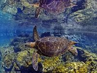 Đẹp mê hồn khoảnh khắc của thế giới đại dương