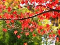 10 điểm ngắm mùa thu rực rỡ ở Trung Quốc