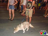 """Người Hà Nội vẫn """"thản nhiên"""" dắt chó không rọ mõm vào phố đi bộ"""