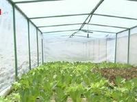Trồng rau thủy canh - mô hình rau sạch được ưa chuộng tại Campuchia