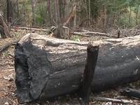 Kon Tum kỷ luật các tổ chức, cá nhân do để xảy ra phá rừng phòng hộ