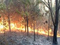 Báo động cháy rừng khẩn cấp dọc các tỉnh miền Trung