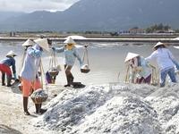 Tạm trữ muối chưa phát huy hiệu quả