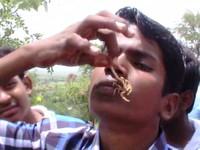Lễ hội bọ cạp Ấn Độ - Sự kiện không dành cho những người yếu tim