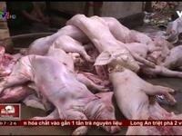 Thâm nhập đường dây mua bán thịt heo chết tại Đồng Nai